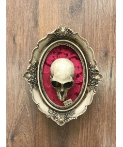 Cuadro Skullture - Skull Monkey